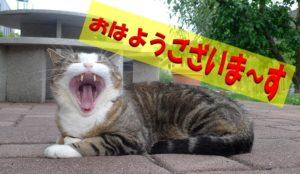猫あくびあいさつ