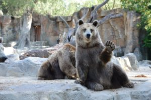 あいさつする熊