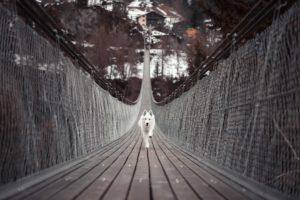 橋を突進する犬