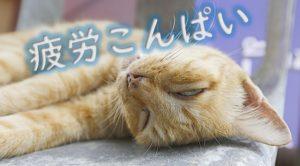 疲労こんぱい
